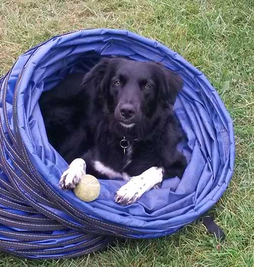 Animal Basics Fun Pet Agility