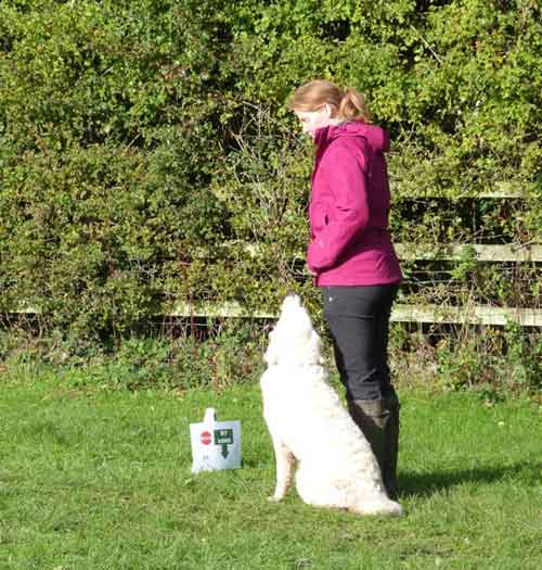 Animal Basics Rally Obedience Course